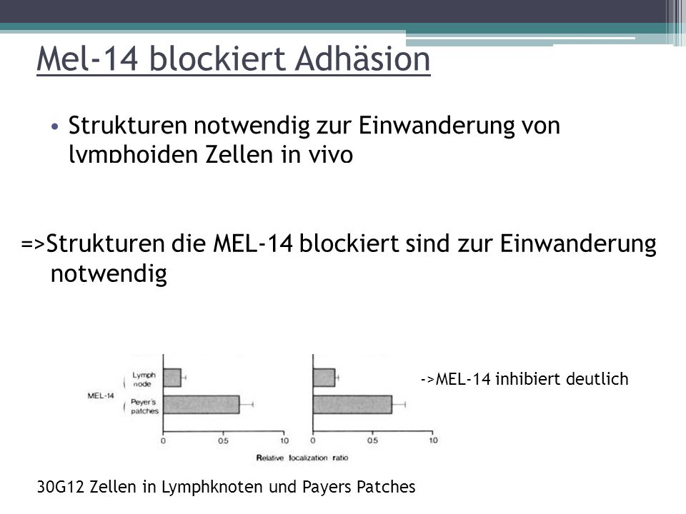 Mel-14 blockiert Adhäsion