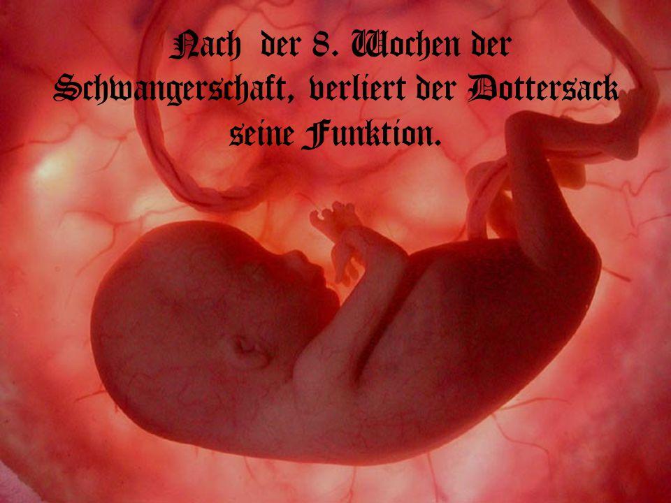 Nach der 8. Wochen der Schwangerschaft, verliert der Dottersack seine Funktion.
