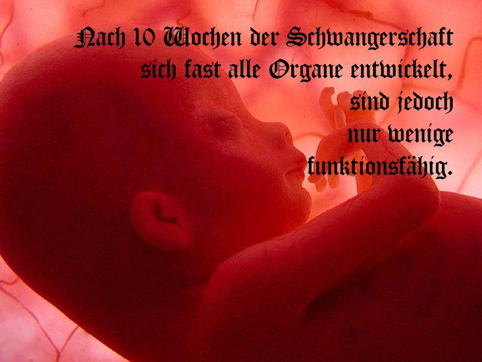 Nach 10 Wochen der Schwangerschaft sich fast alle Organe entwickelt, sind jedoch nur wenige funktionsfähig.