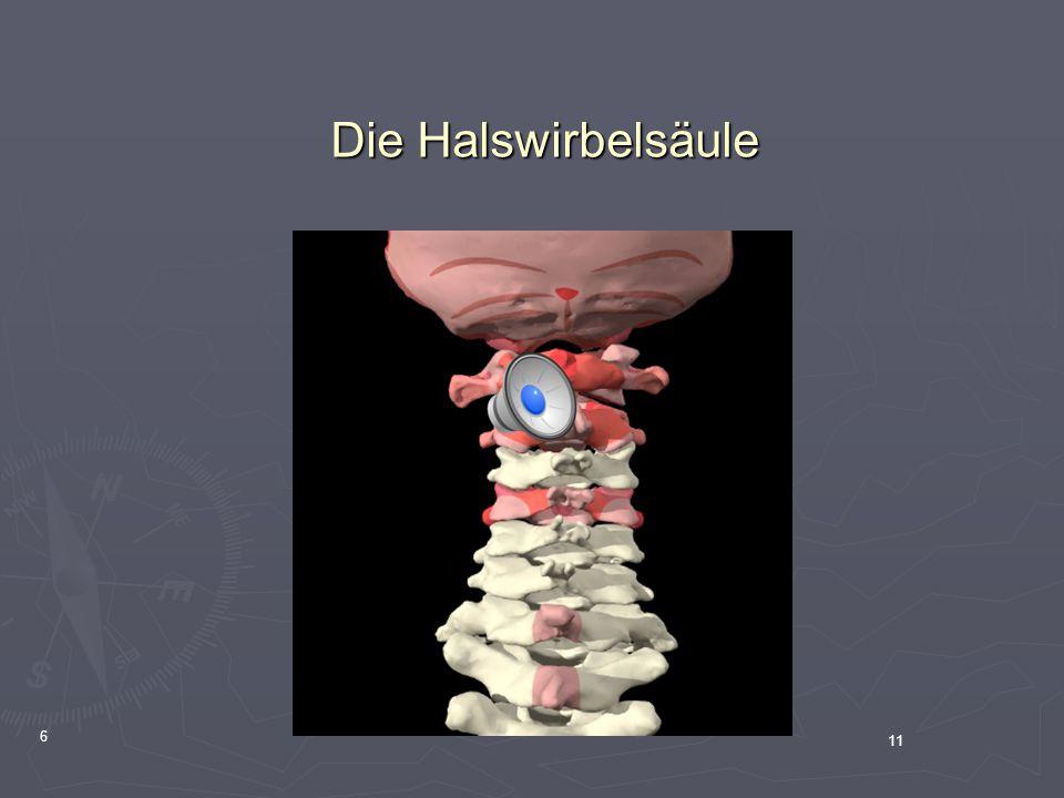 Die Halswirbelsäule 6 11