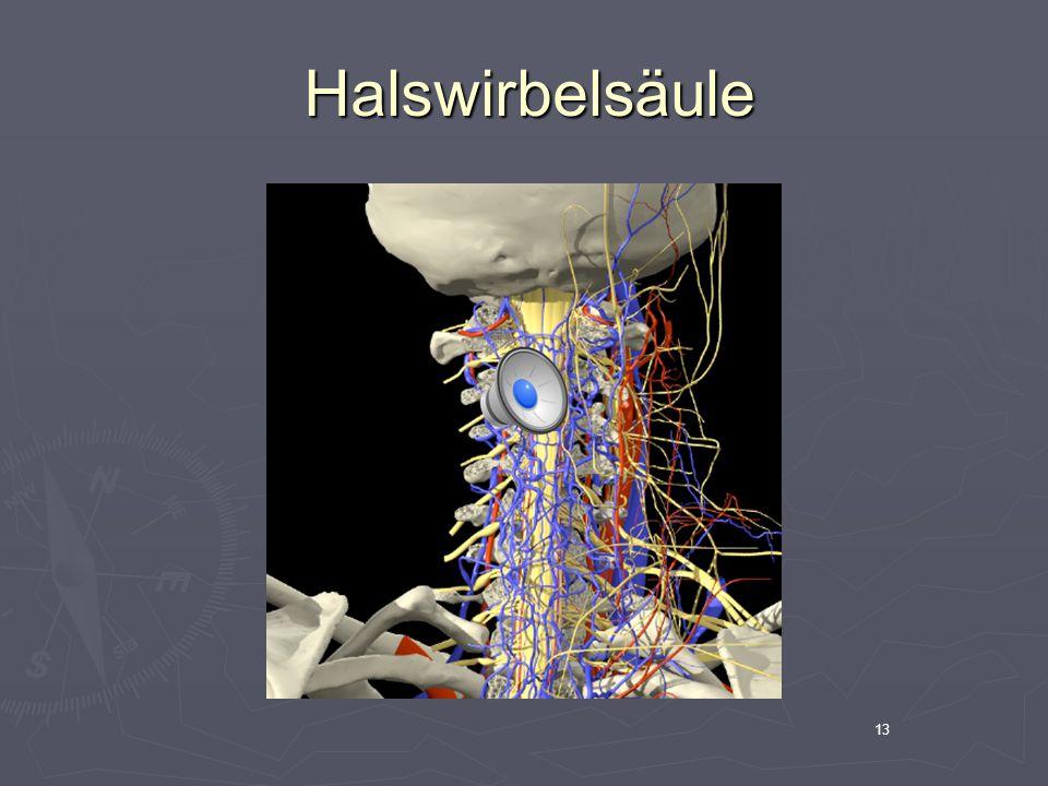 Halswirbelsäule 13