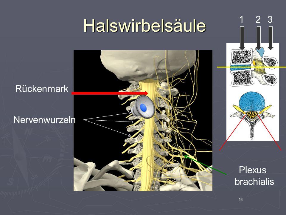 Halswirbelsäule 1 2 3 Rückenmark Nervenwurzeln Plexus brachialis 14