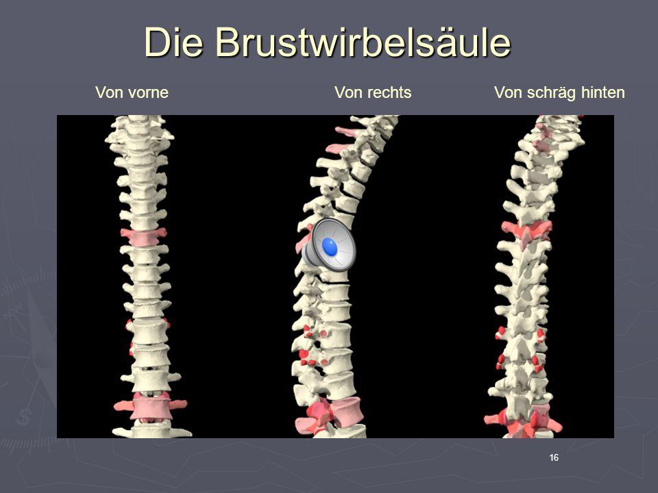 Die Brustwirbelsäule Von vorne Von rechts Von schräg hinten 16