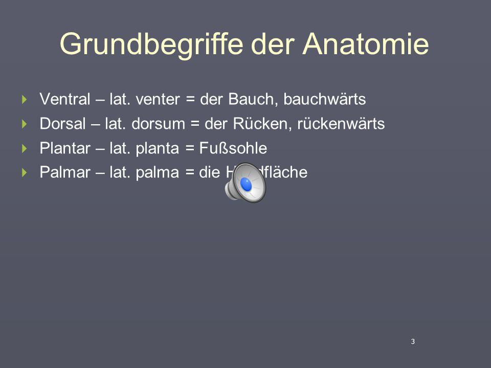 Grundbegriffe der Anatomie