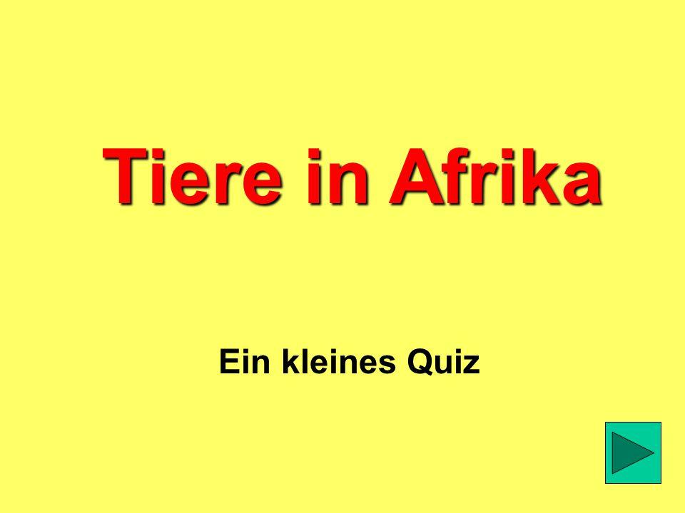 Tiere in Afrika Ein kleines Quiz