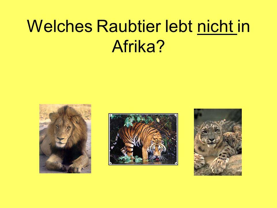 Welches Raubtier lebt nicht in Afrika