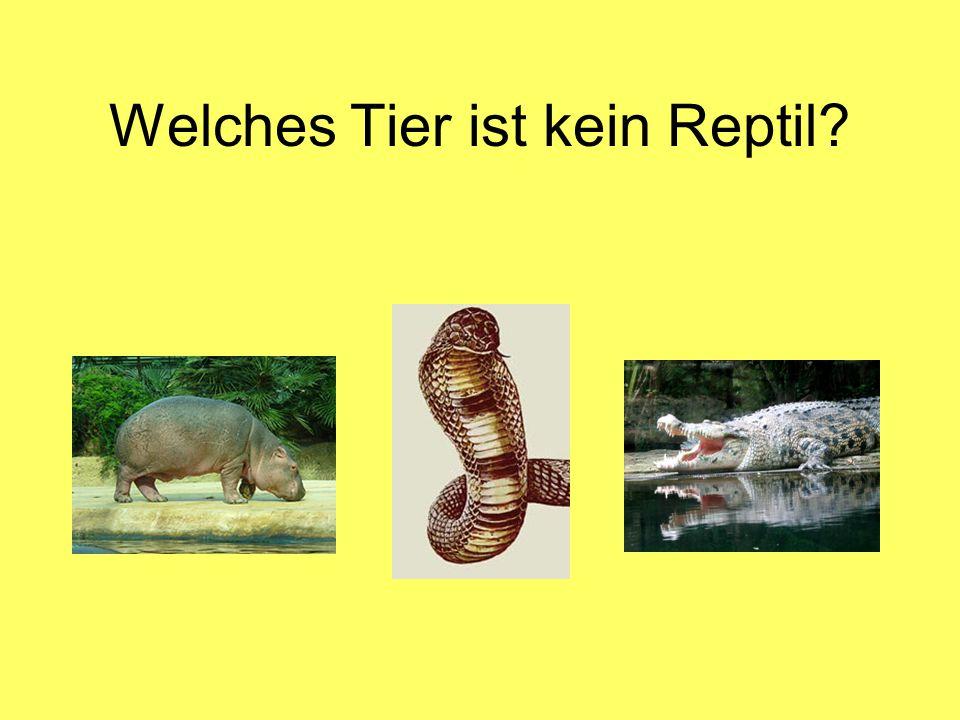 Welches Tier ist kein Reptil