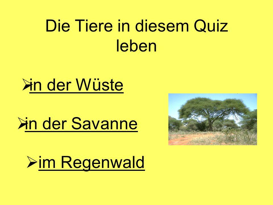 Die Tiere in diesem Quiz leben