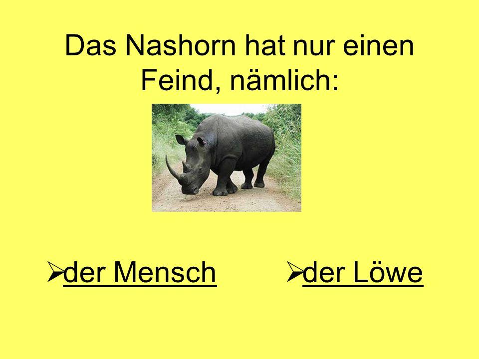 Das Nashorn hat nur einen Feind, nämlich: