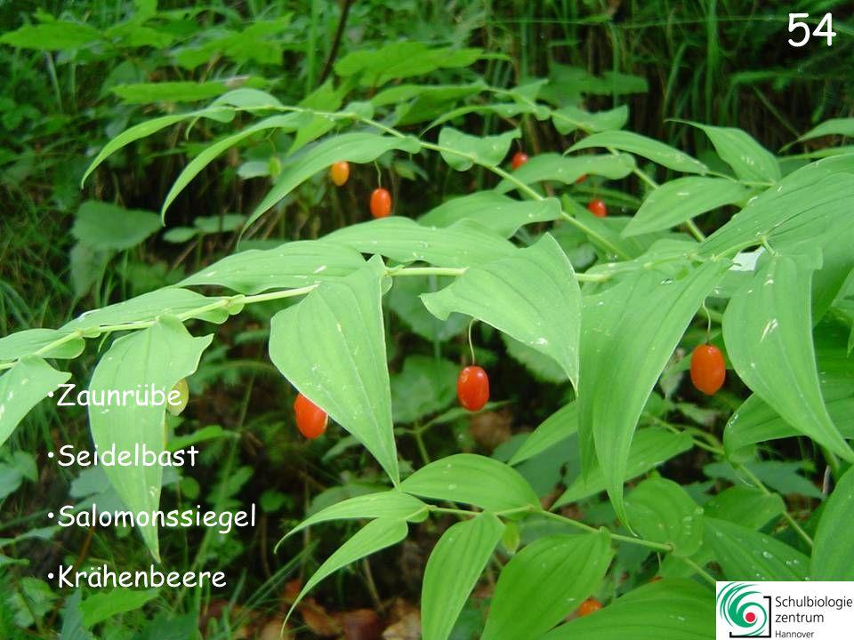 55 Echte Mispel Hopfen Weizen Hemlock