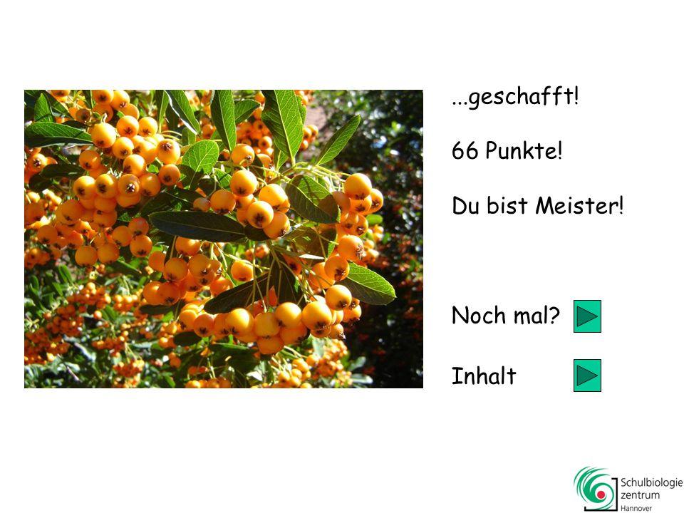 Inhalt: Weiter 1 Pyracantha coccinea Feuerdorn 29 Tilia spec Linde 2