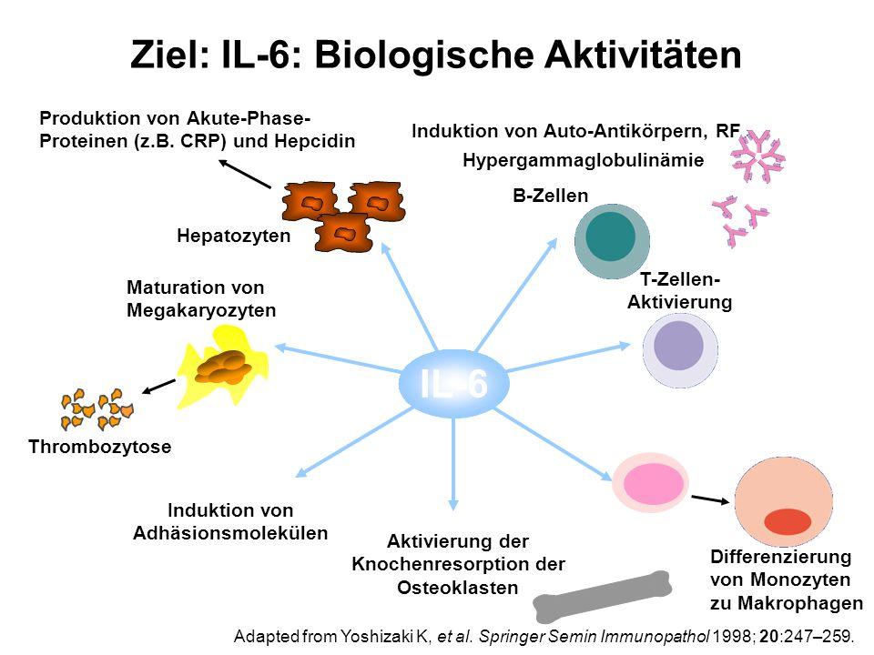 Ziel: IL-6: Biologische Aktivitäten