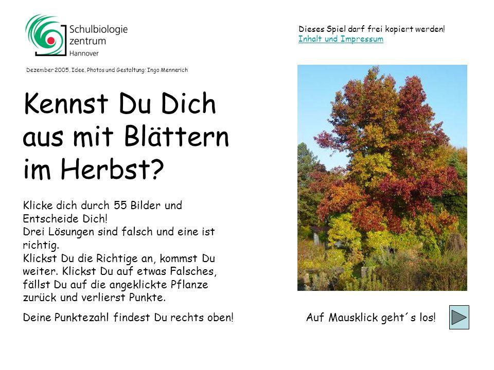 Kennst Du Dich aus mit Blättern im Herbst