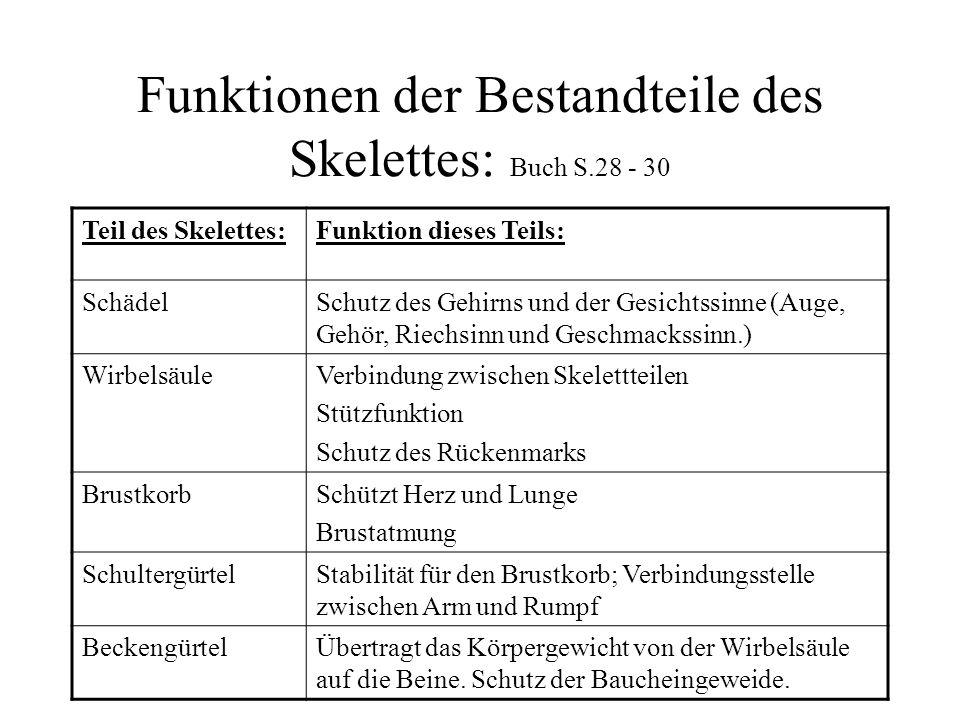 Funktionen der Bestandteile des Skelettes: Buch S.28 - 30