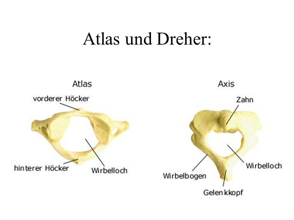 Atlas und Dreher:
