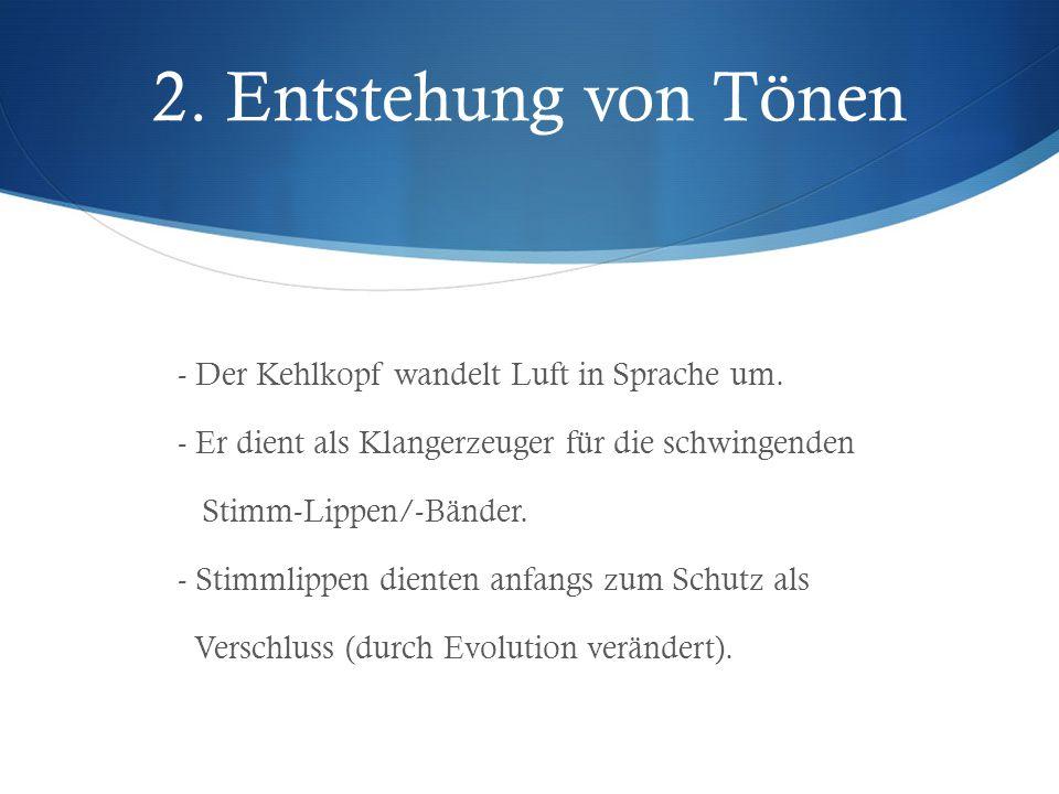 2. Entstehung von Tönen - Der Kehlkopf wandelt Luft in Sprache um.