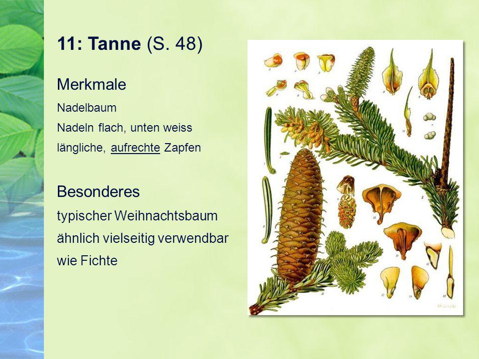 11: Tanne (S. 48)
