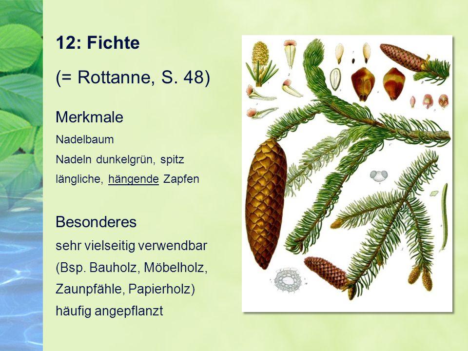 12: Fichte (= Rottanne, S. 48)