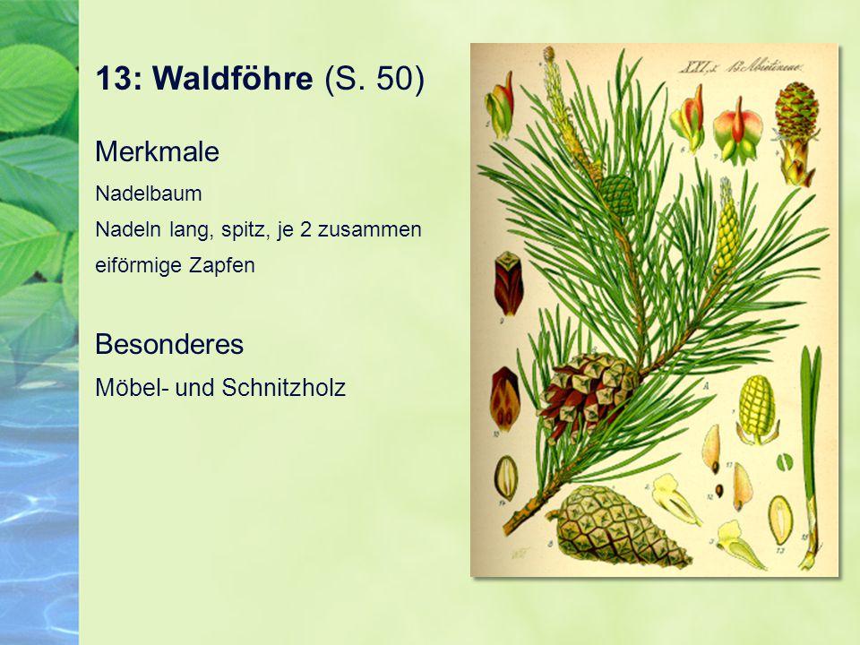 13: Waldföhre (S.