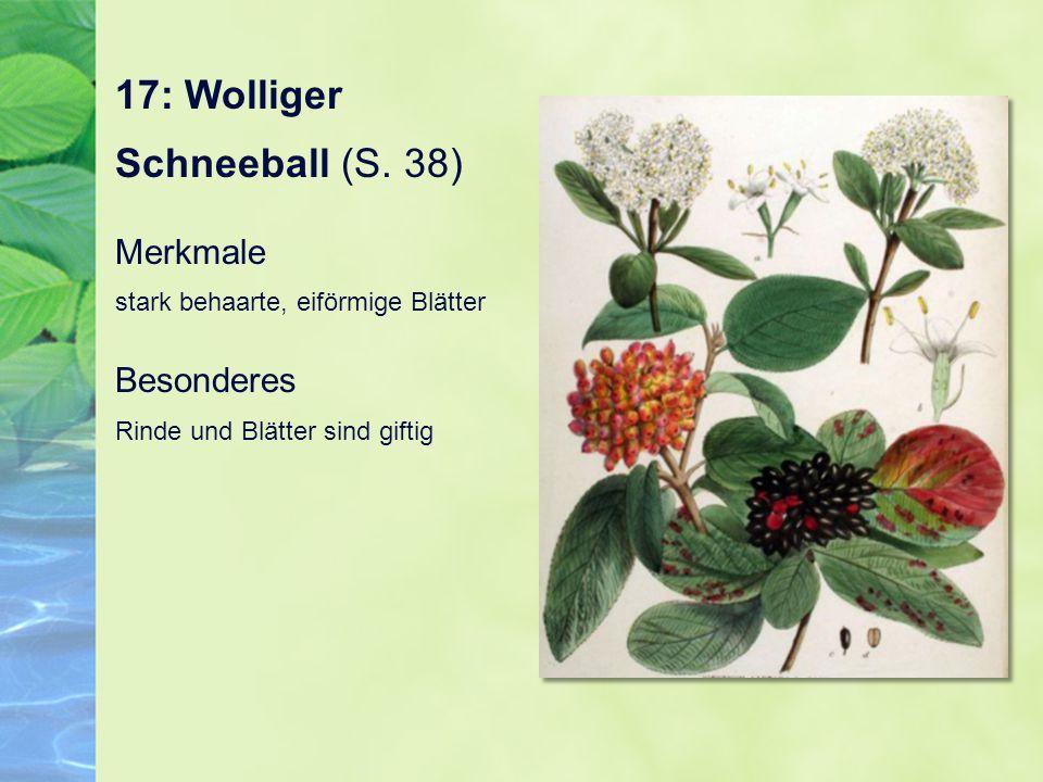 17: Wolliger Schneeball (S. 38)