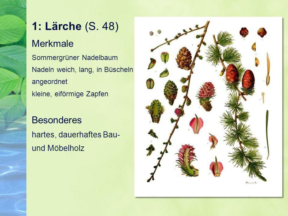1: Lärche (S.