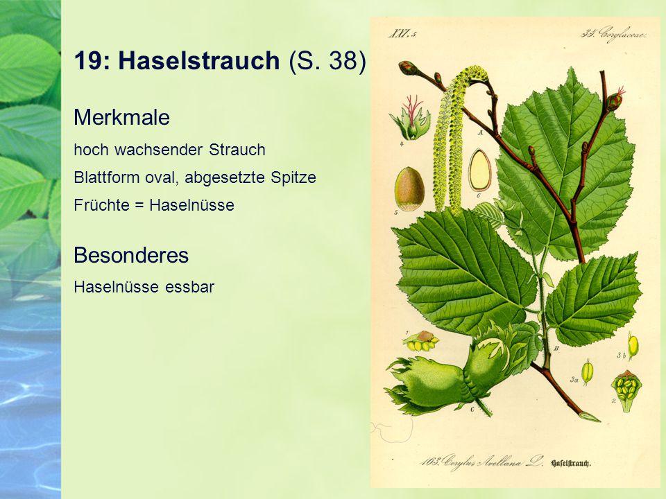 19: Haselstrauch (S. 38) Merkmale hoch wachsender Strauch Blattform oval, abgesetzte Spitze Früchte = Haselnüsse.
