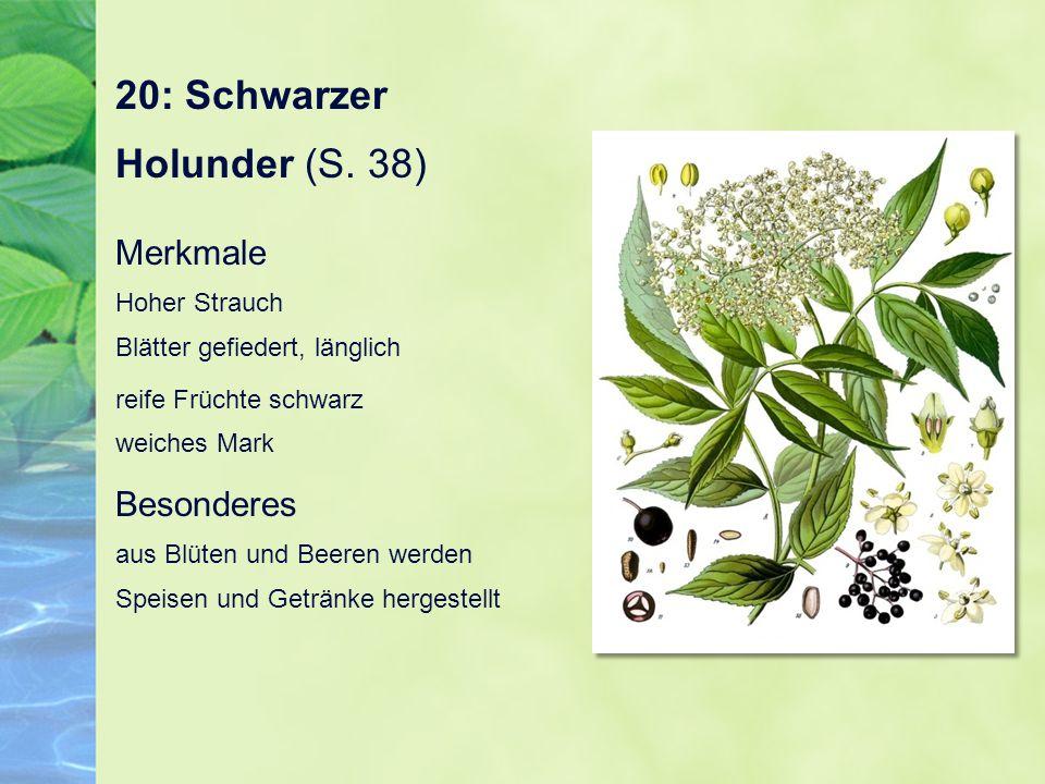 20: Schwarzer Holunder (S. 38)