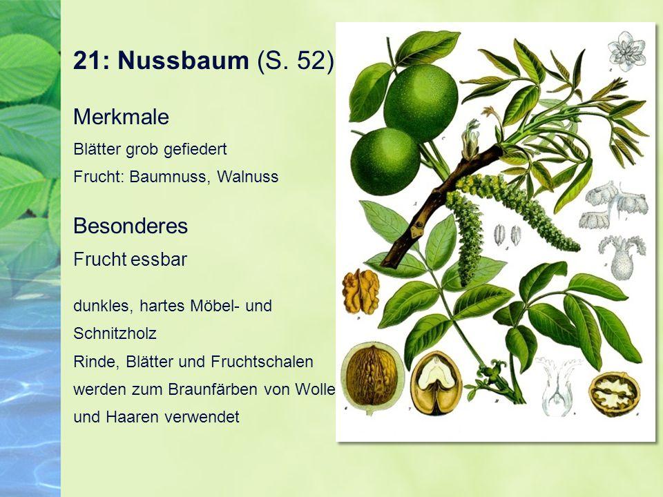 21: Nussbaum (S. 52) Merkmale Blätter grob gefiedert Frucht: Baumnuss, Walnuss. Besonderes Frucht essbar.