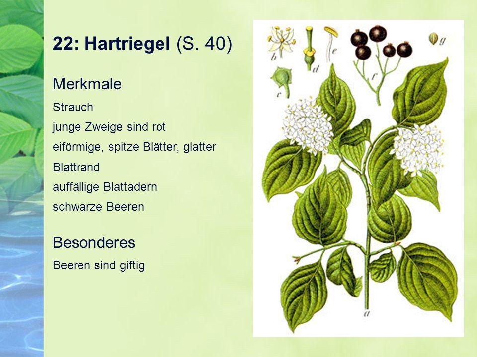 22: Hartriegel (S. 40)