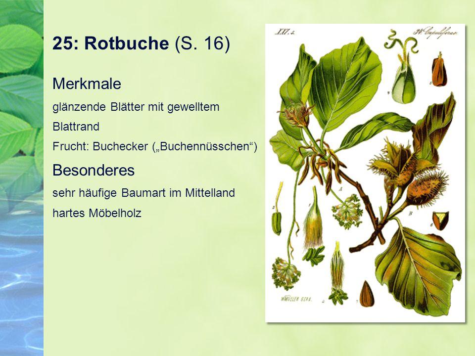 25: Rotbuche (S. 16)