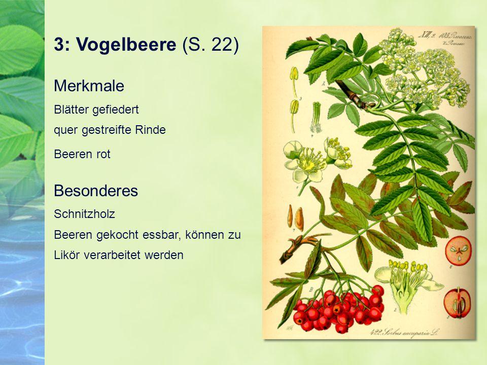 3: Vogelbeere (S. 22) Merkmale Blätter gefiedert quer gestreifte Rinde