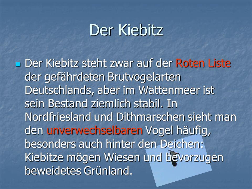 Der Kiebitz