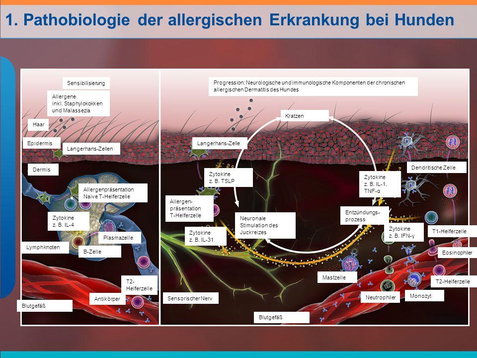 1. Pathobiologie der allergischen Erkrankung bei Hunden
