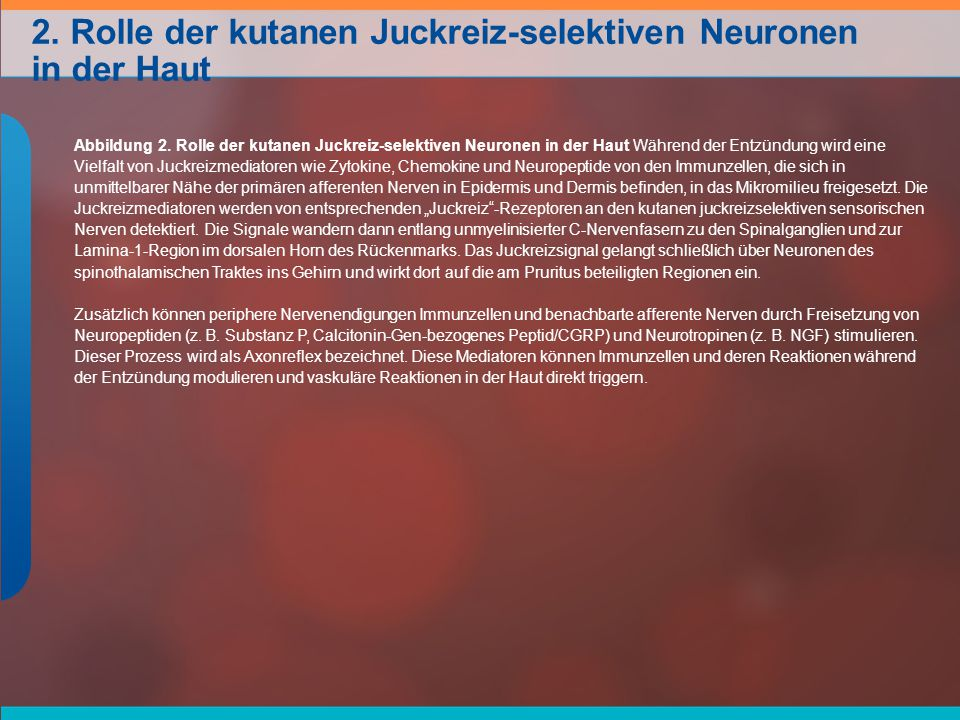 2. Rolle der kutanen Juckreiz-selektiven Neuronen in der Haut