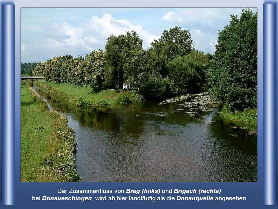 Der Zusammenfluss von Breg (links) und Brigach (rechts) bei Donaueschingen, wird ab hier landläufig als die Donauquelle angesehen