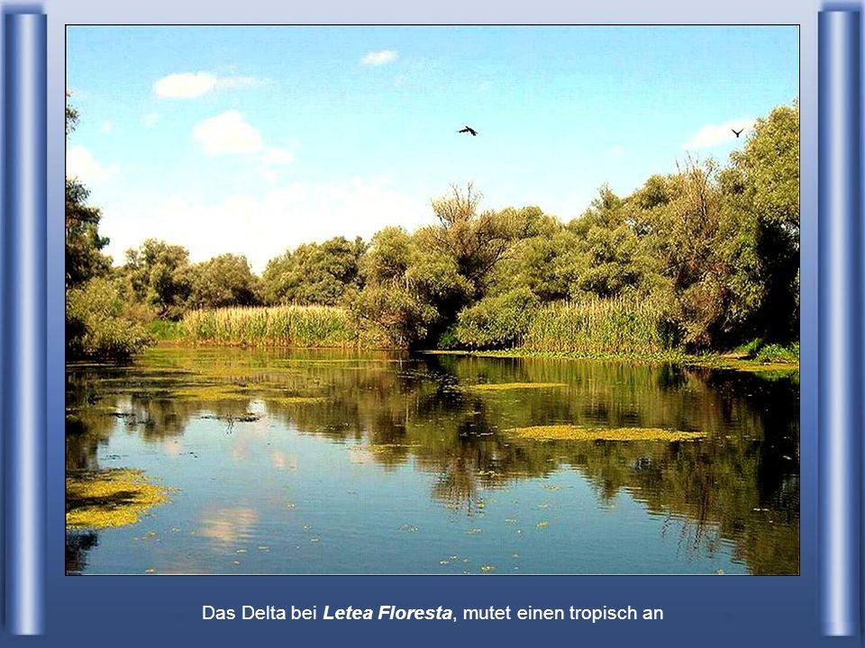 Das Delta bei Letea Floresta, mutet einen tropisch an