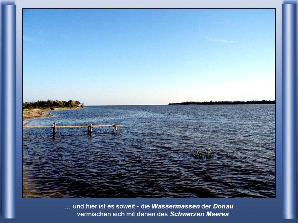 … und hier ist es soweit - die Wassermassen der Donau vermischen sich mit denen des Schwarzen Meeres