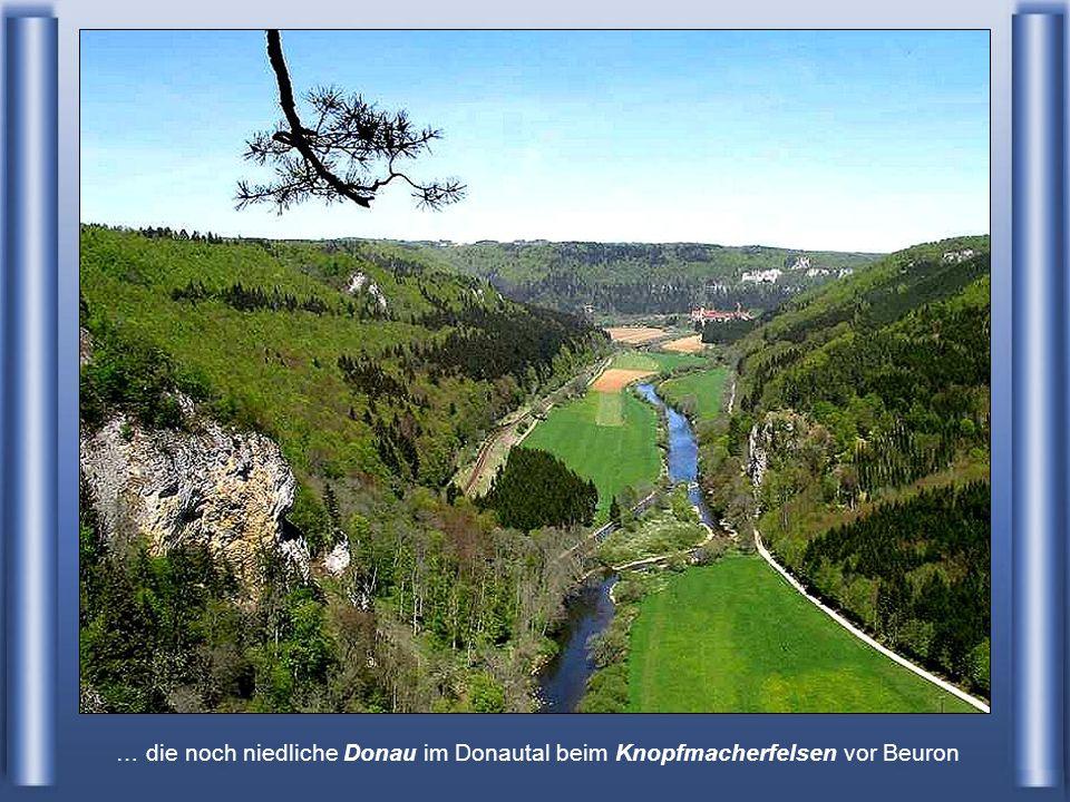 … die noch niedliche Donau im Donautal beim Knopfmacherfelsen vor Beuron
