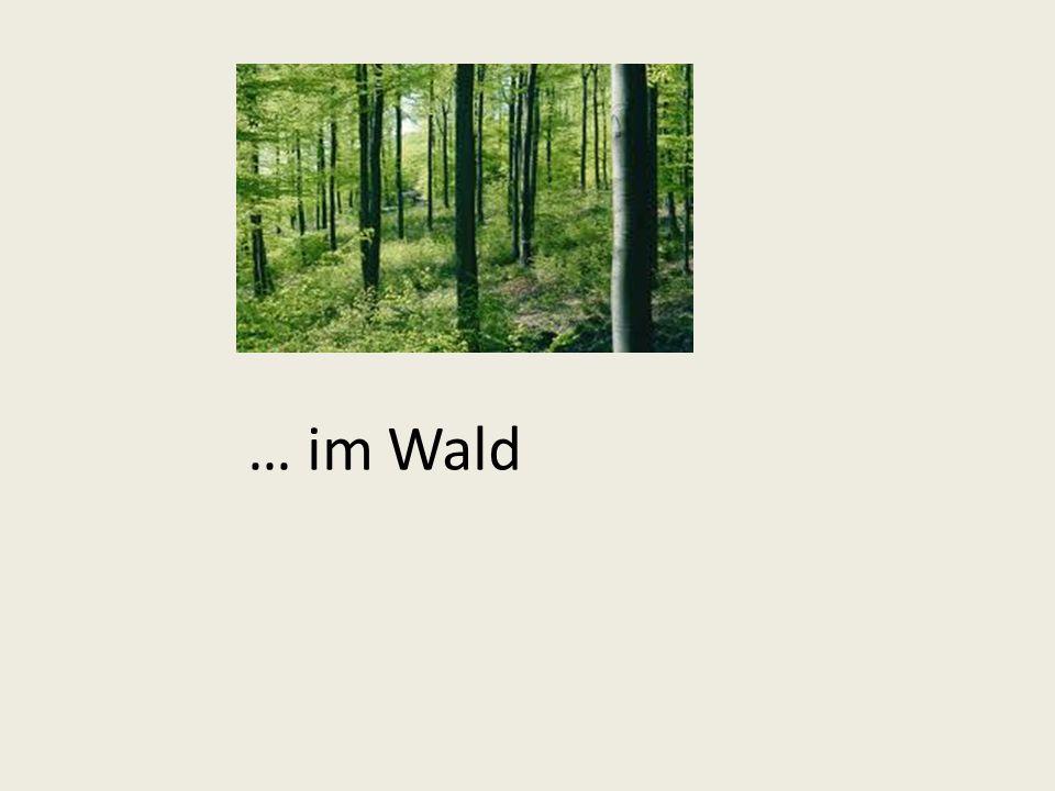 … im Wald