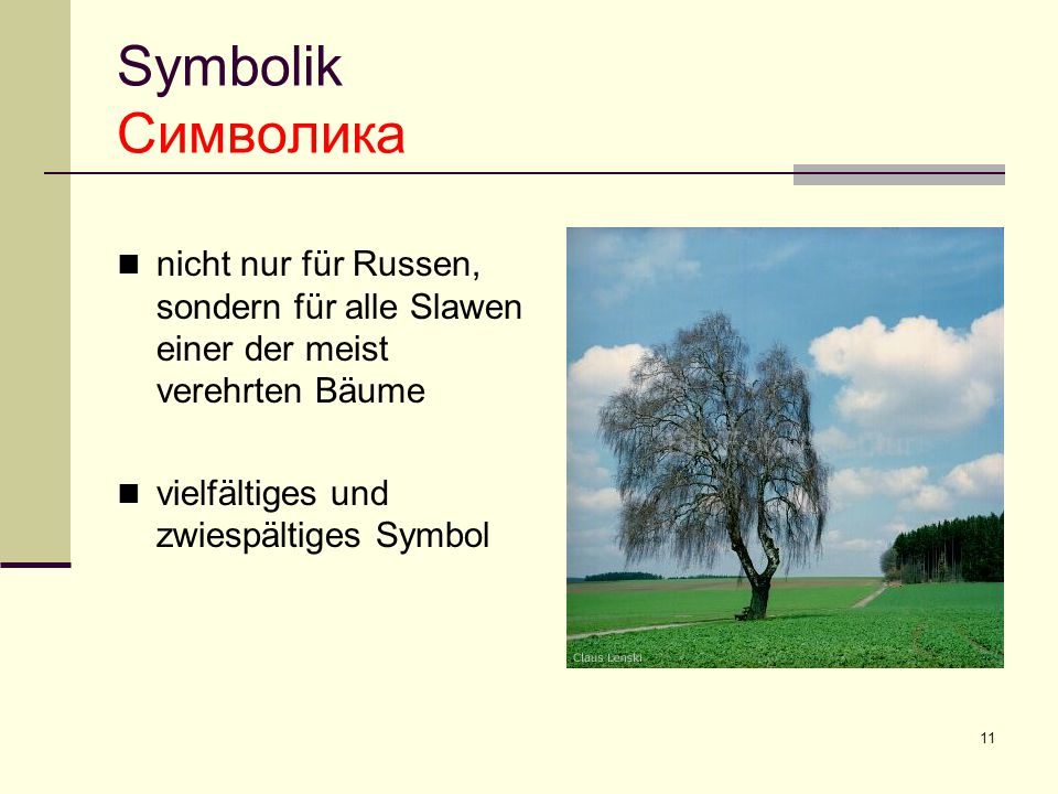 Symbolik Символика nicht nur für Russen, sondern für alle Slawen einer der meist verehrten Bäume.
