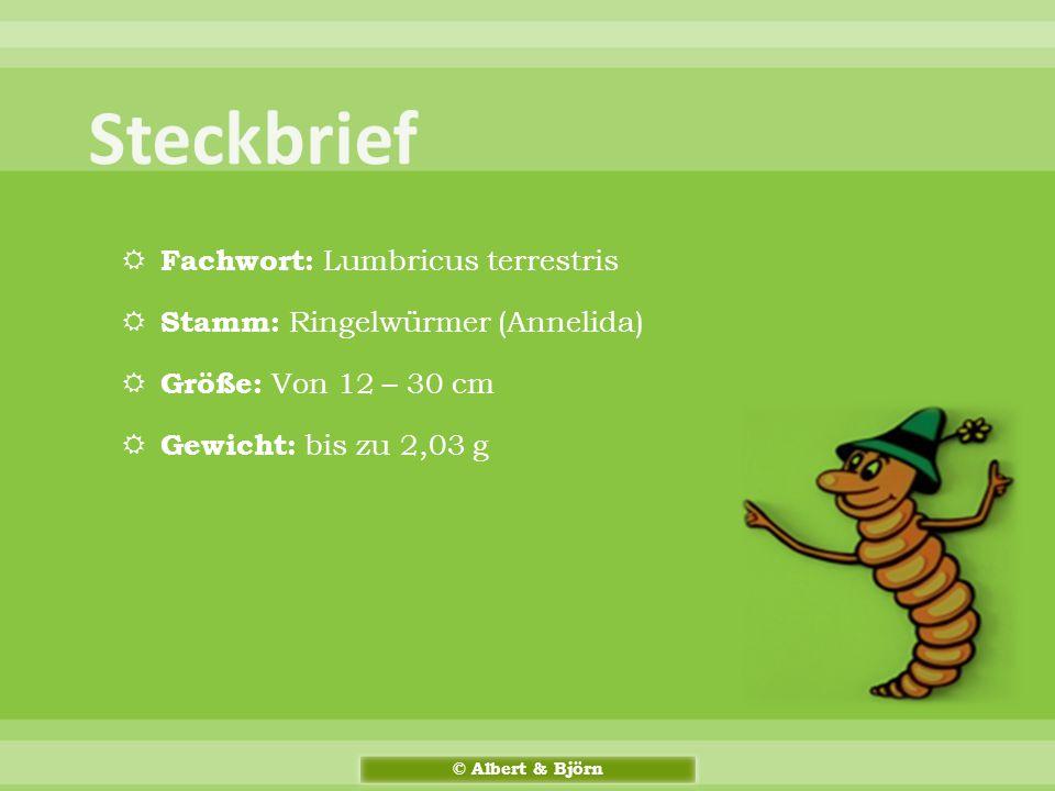 Steckbrief Fachwort: Lumbricus terrestris