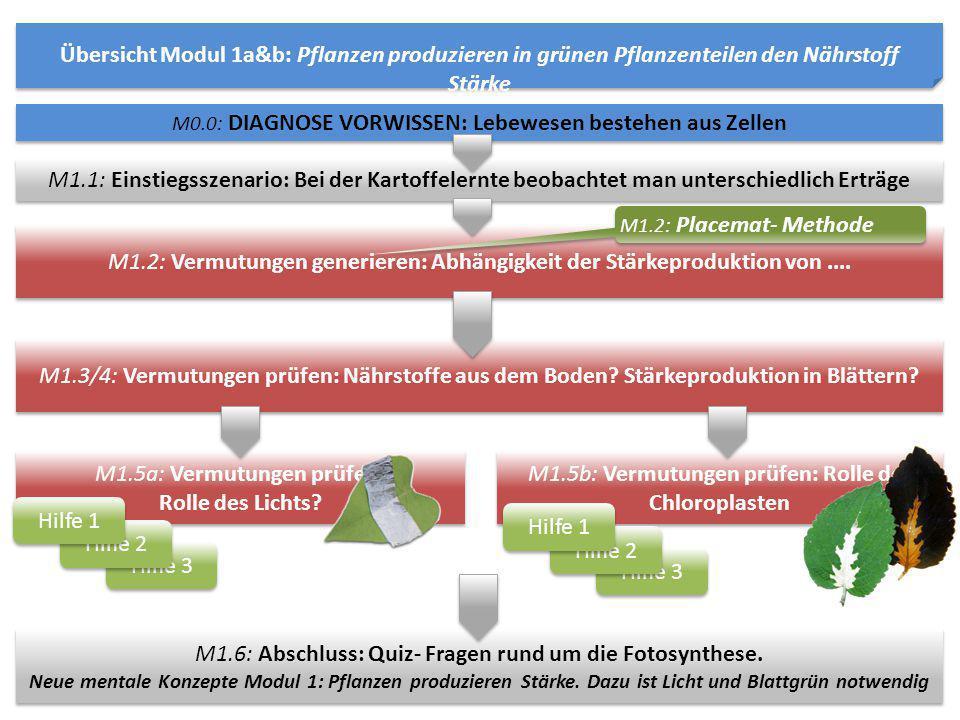 M1.5a: Vermutungen prüfen: Rolle des Lichts