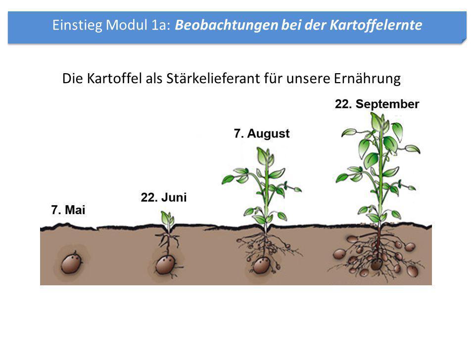Einstieg Modul 1a: Beobachtungen bei der Kartoffelernte