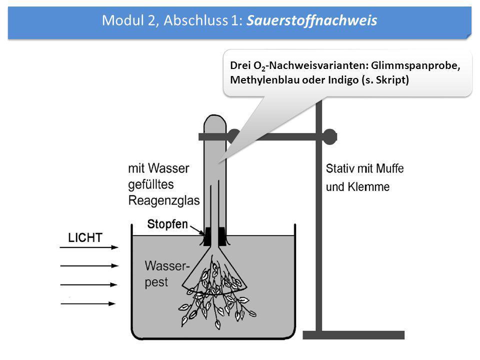 Modul 2, Abschluss 1: Sauerstoffnachweis