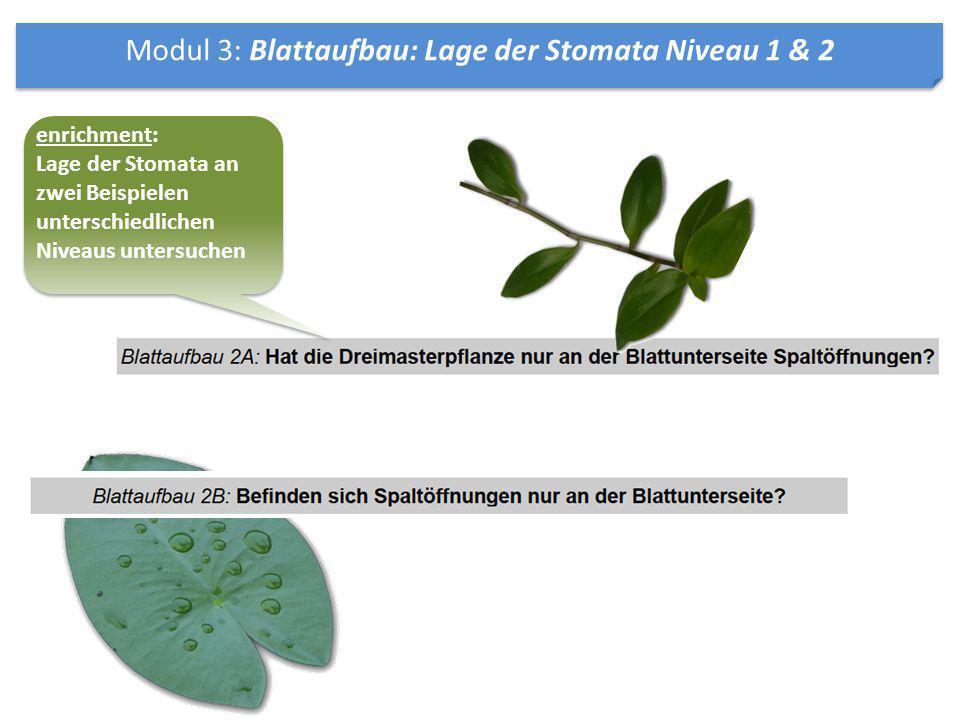 Modul 3: Blattaufbau: Lage der Stomata Niveau 1 & 2