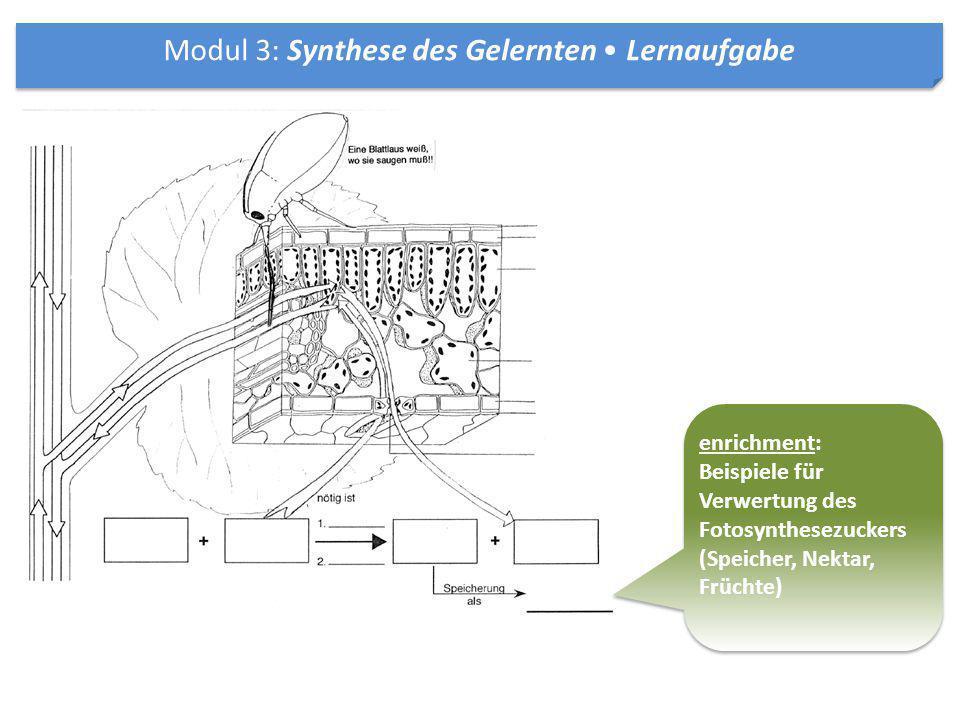 Modul 3: Synthese des Gelernten • Lernaufgabe