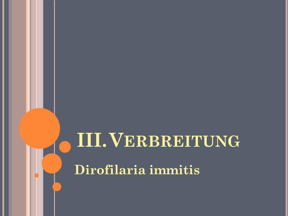 III. Verbreitung Dirofilaria immitis