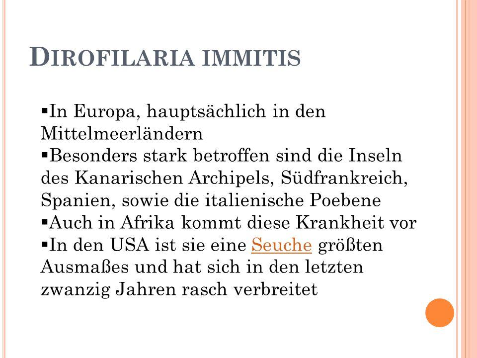 Dirofilaria immitis In Europa, hauptsächlich in den Mittelmeerländern