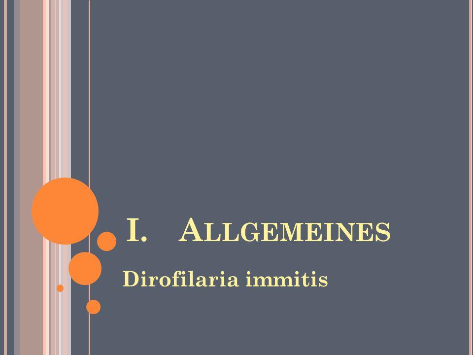I. Allgemeines Dirofilaria immitis