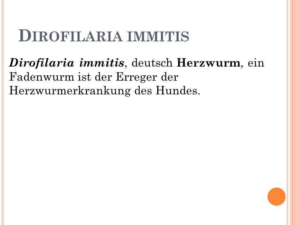 Dirofilaria immitis Dirofilaria immitis, deutsch Herzwurm, ein Fadenwurm ist der Erreger der Herzwurmerkrankung des Hundes.